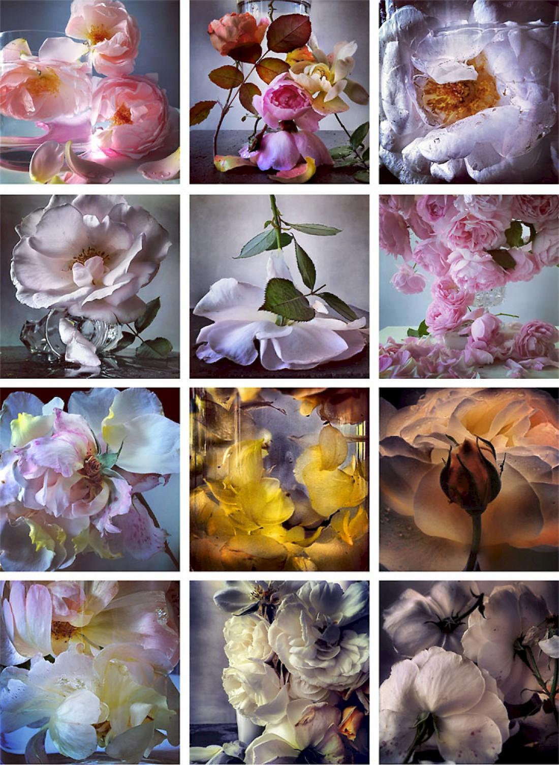 flora-grid_web-1.1100x0.jpg