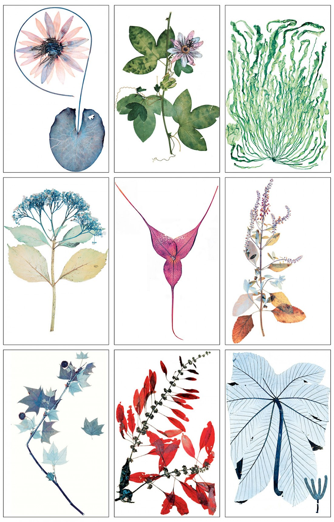 flora-grid-2-web.1100x0.jpg