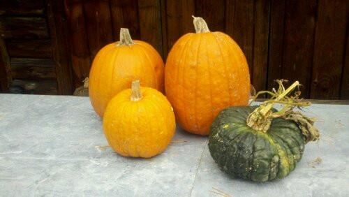 Pumpkins.jpg