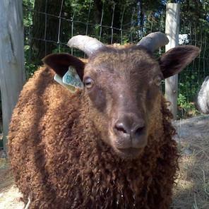 Breeding_Stock_2012.jpg