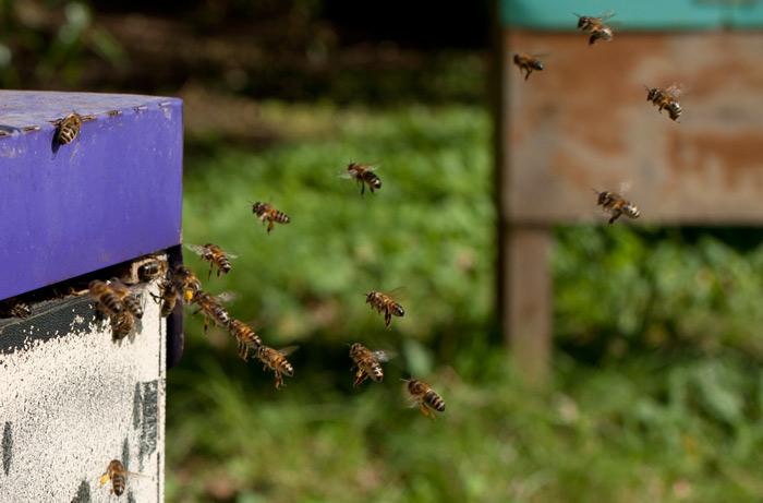 bees-landing.jpg