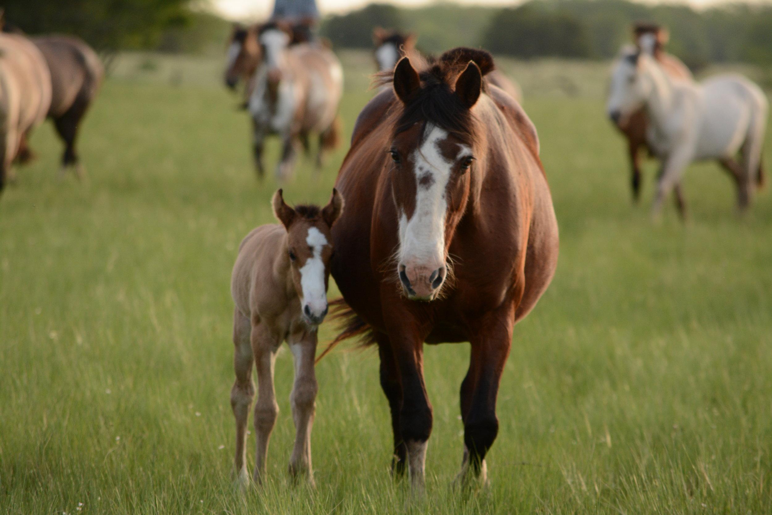 Breeding & FOAL CARE