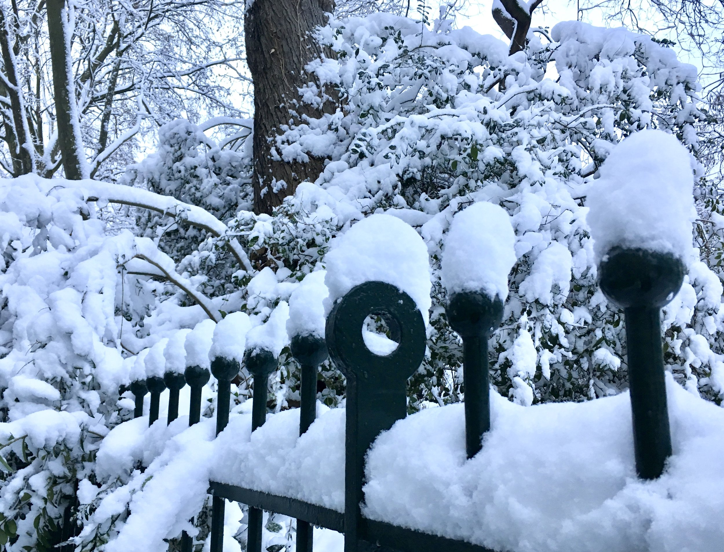 Snow-covered fence