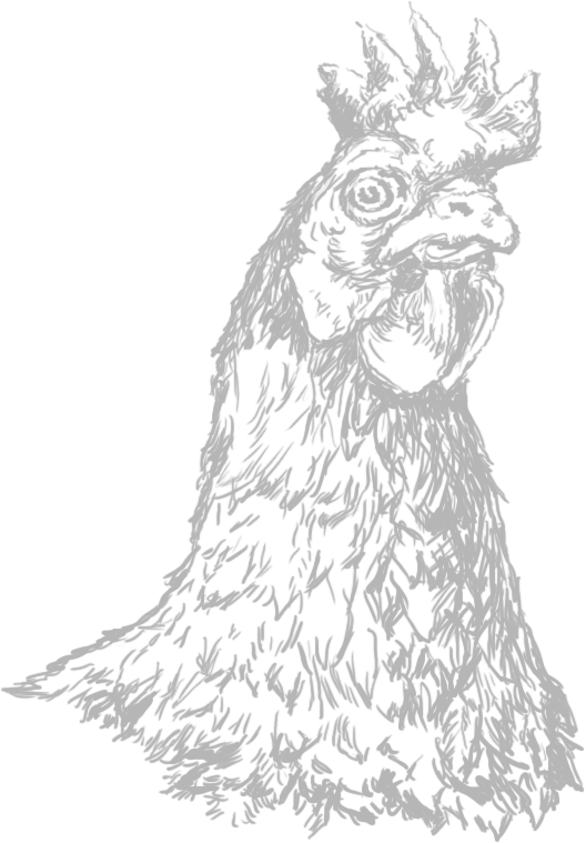 chicken_drawing_528x759 white.png