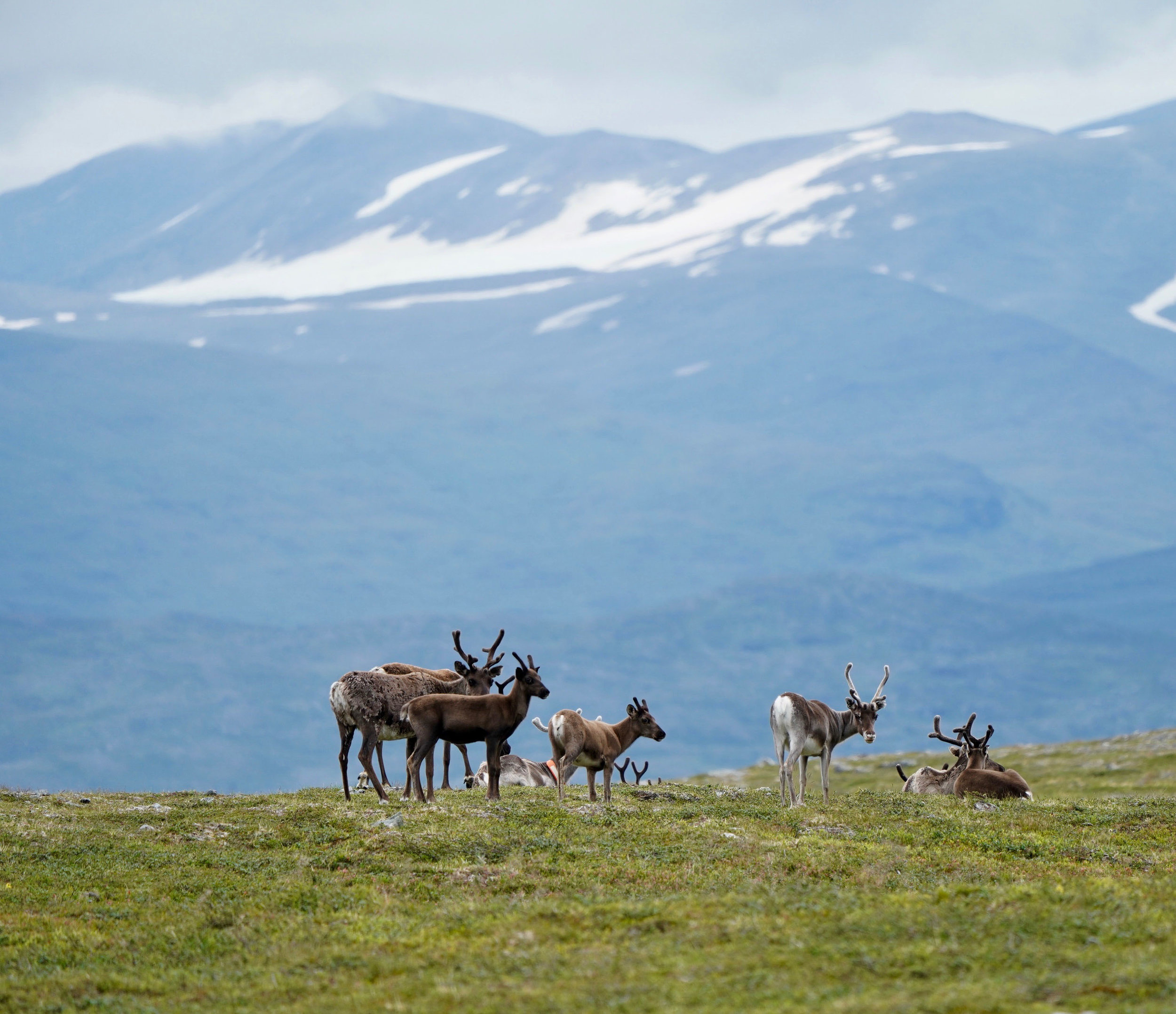 Lapland Day 1--9.jpg