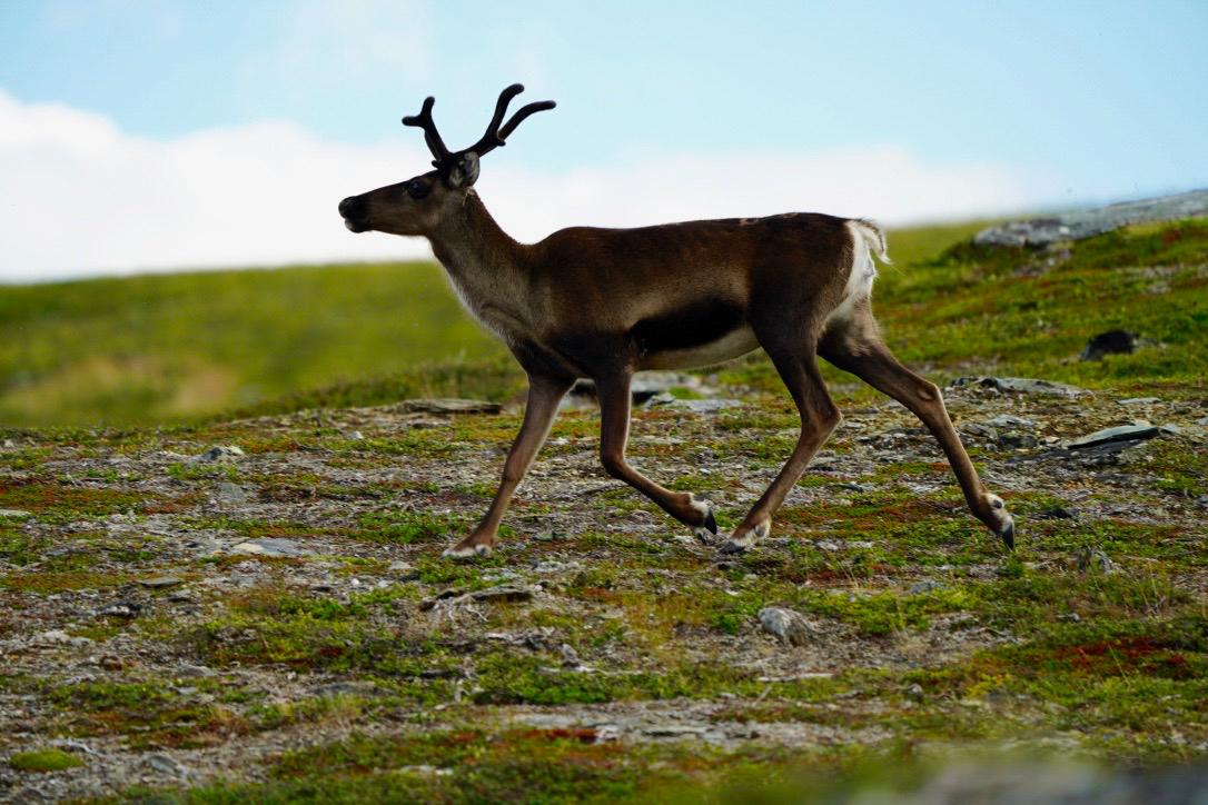 Lapland Day 2-5.jpg