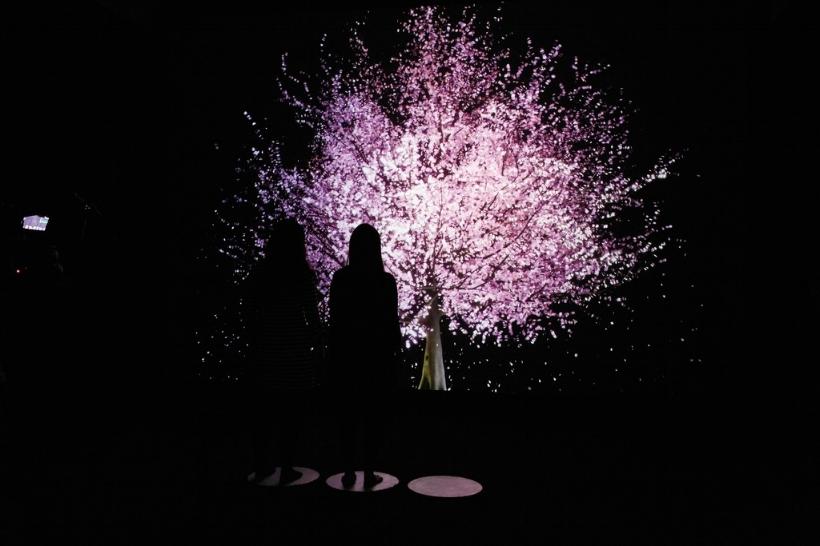Lisa Park - Blooming
