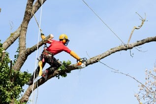 Tree Services - Due to the height and weight of limbs, removing trees can be a hazardous job if it is not done correctly. If your trees are interfering with power lines or another structure, we take care of it. Our team gets the job done right in a timely and efficient manner to remove your dead or diseased trees.
