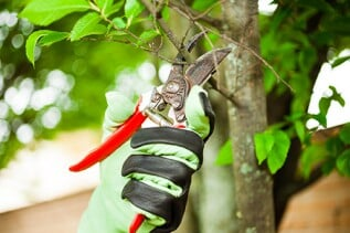 Tree Trimming - Remove dead branches, hazardous limbs, and other parts of your trees with our services. For the best results, we recommend you have your trees trimmed on a regular basis to keep them healthy. Our experts get your job done right.