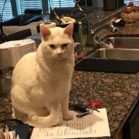 best cat sitter