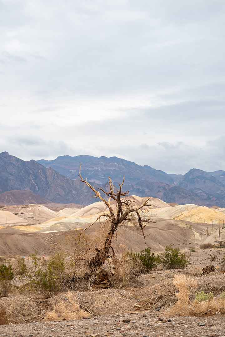 Death-Valley-Tree.jpg