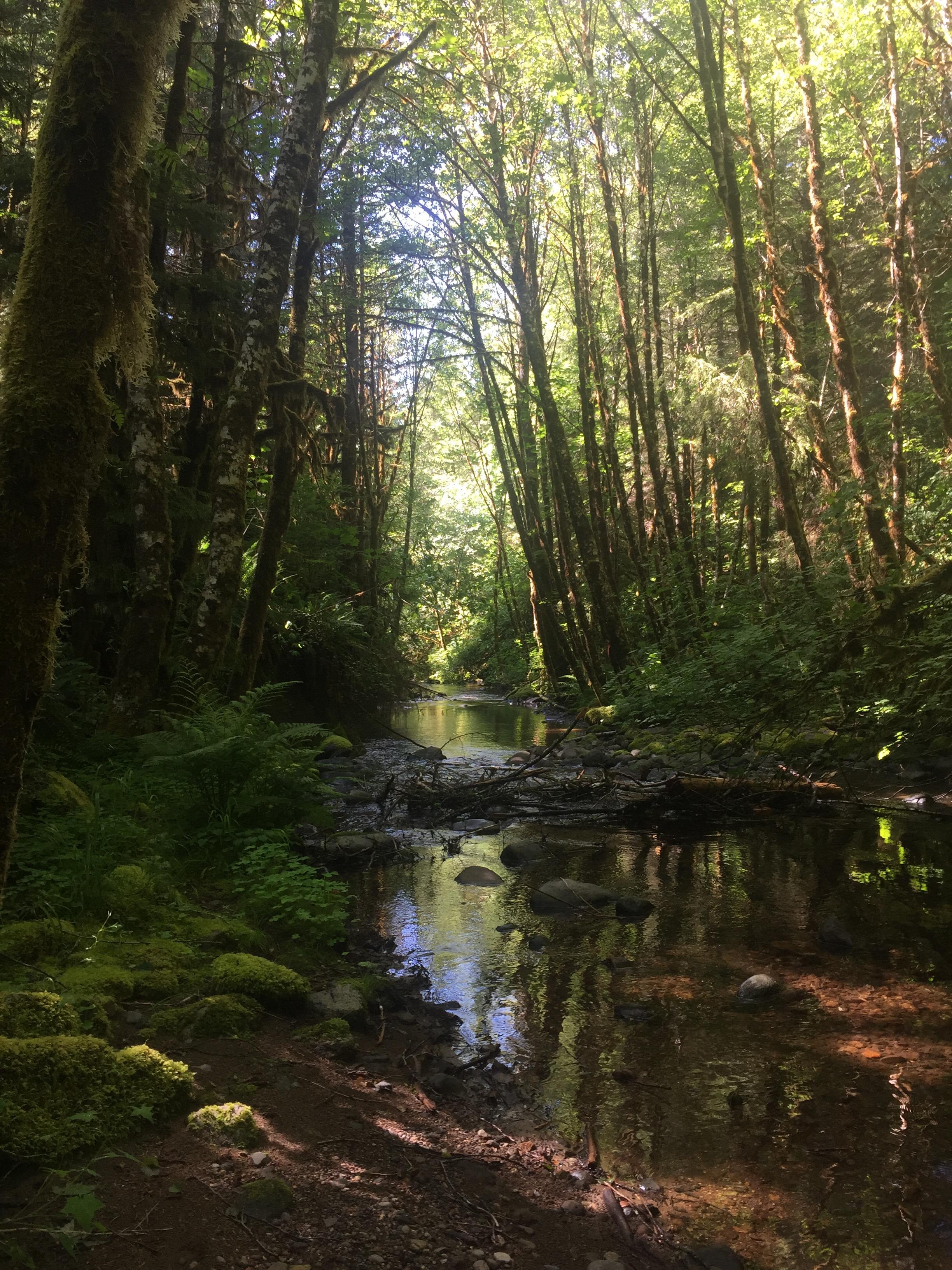 Fall Creek, Oregon