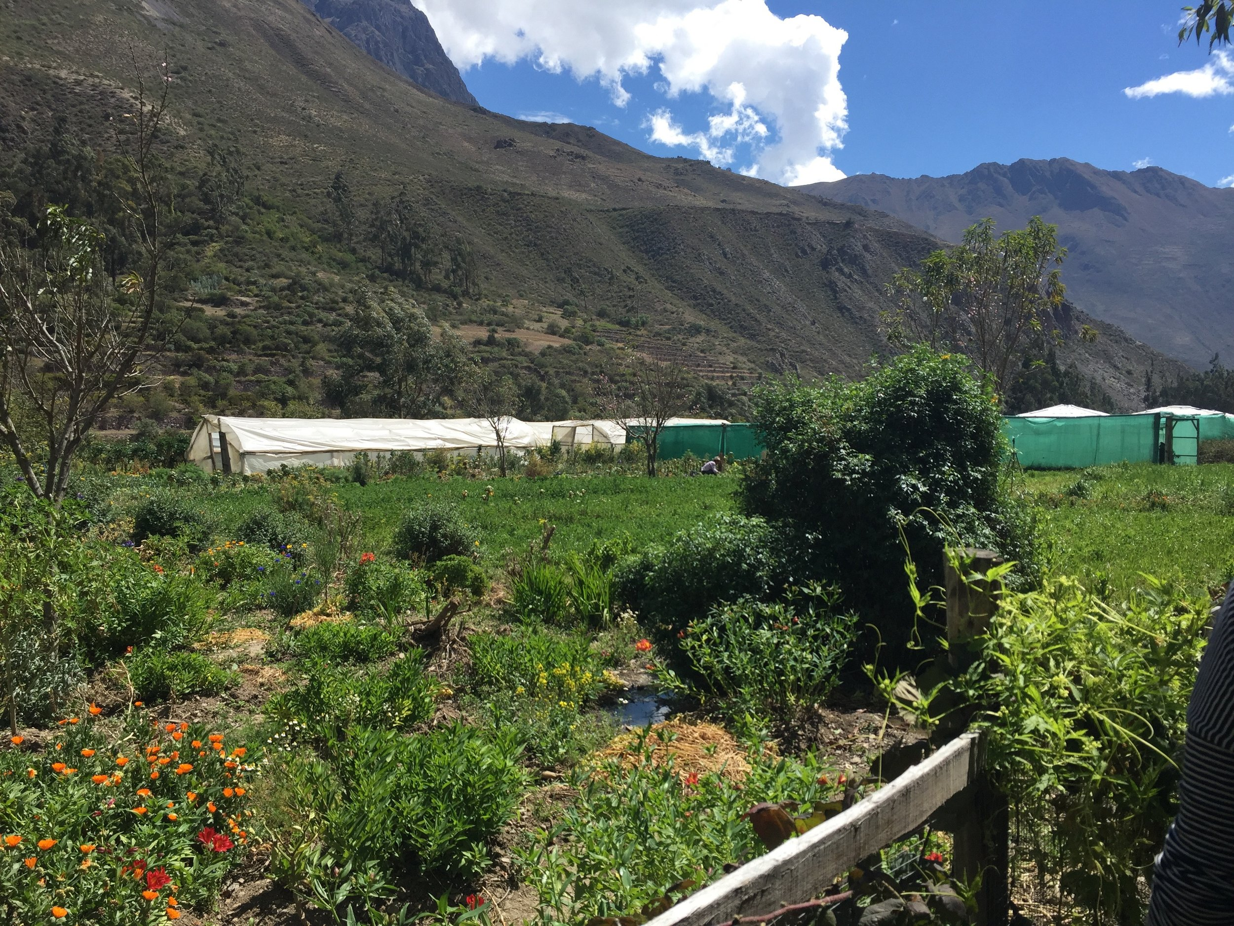 Farm in the Scared Valley of Peru