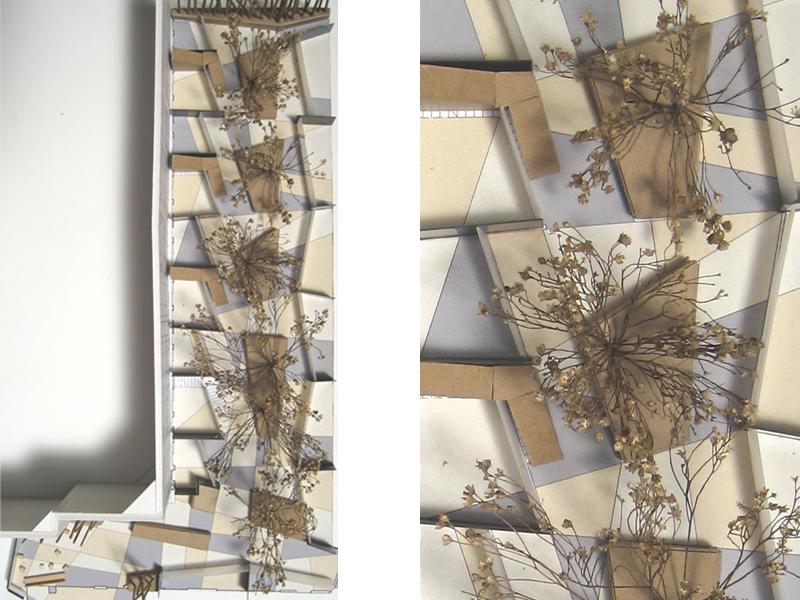 persp_collage.jpg