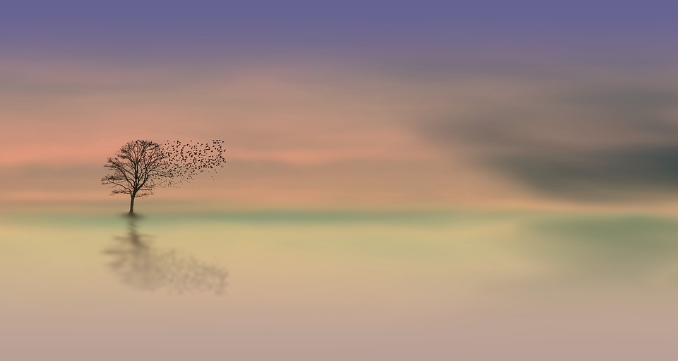 Tree surrounded by mist in a tranquil setting.