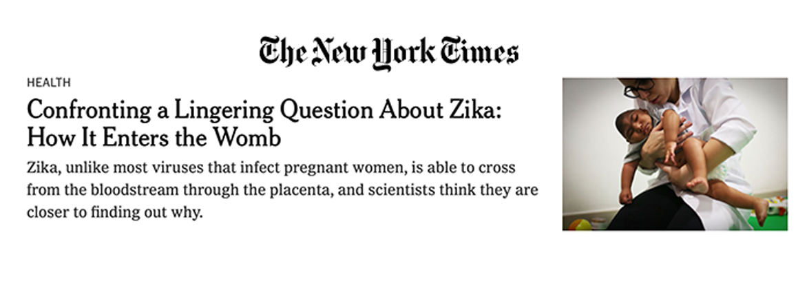 Our work featured in the New York Times