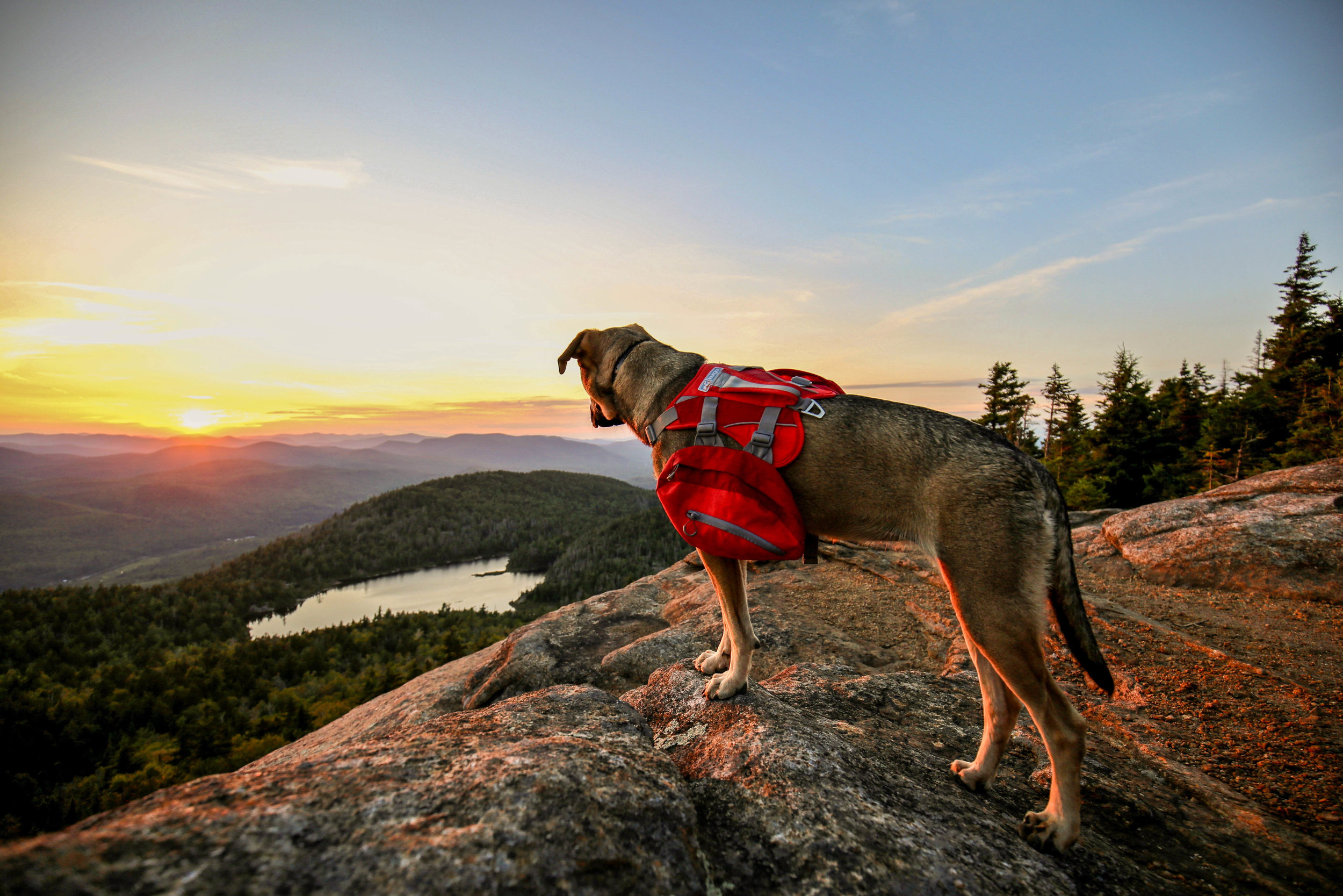Evan & Hilary's ADK-9 Lucy has her own Insta! Follow her adventures  here .
