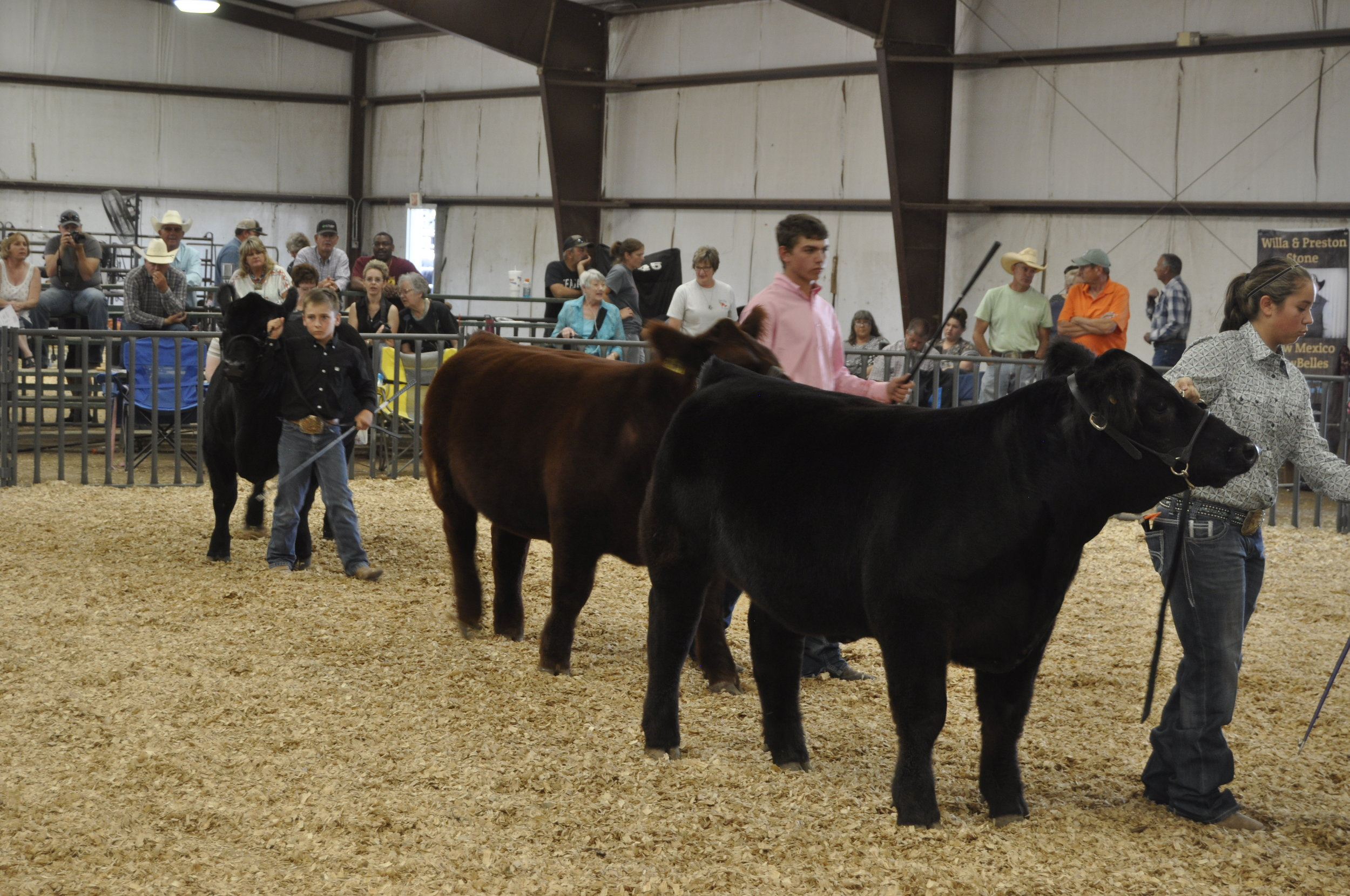 Youth showing calf at Lincoln County Fair