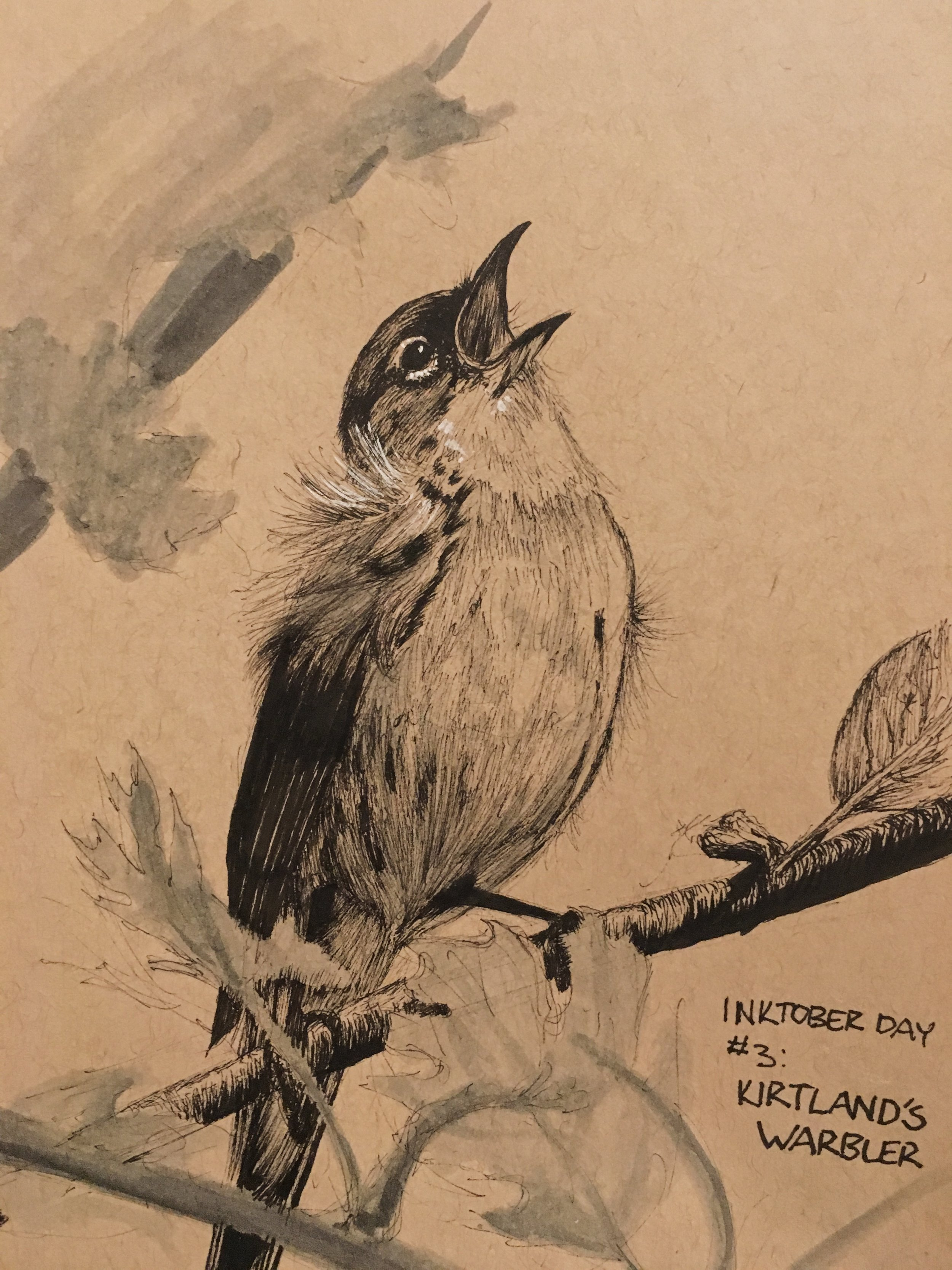 Inktober: Kirtland's Warbler 2018. Ink.