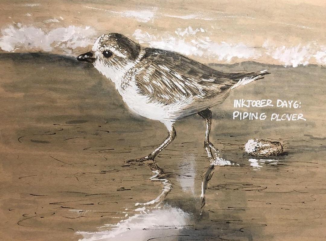 Inktober: Piping Plover, 2018.  Ink.