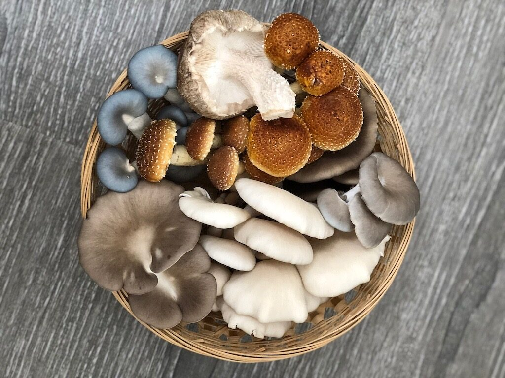 <p><strong>Fresh From the Farm Fungi</strong><i>More →</i></p>