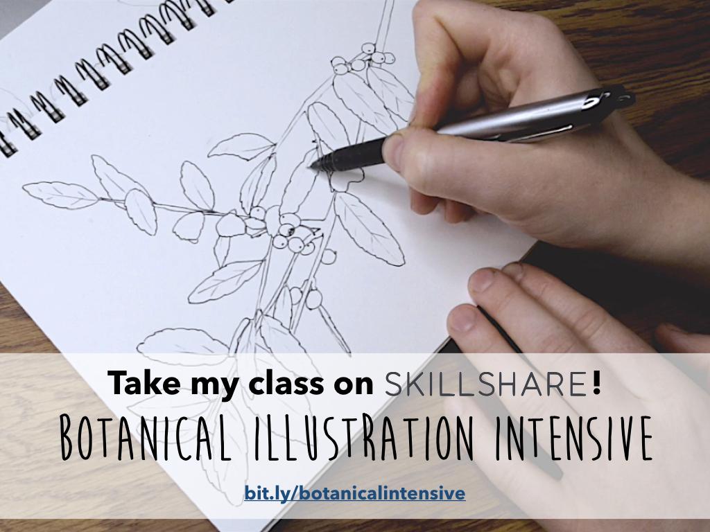 skillshare instagram ad.001.jpeg