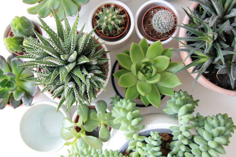 mothers-day-succulents.jpg