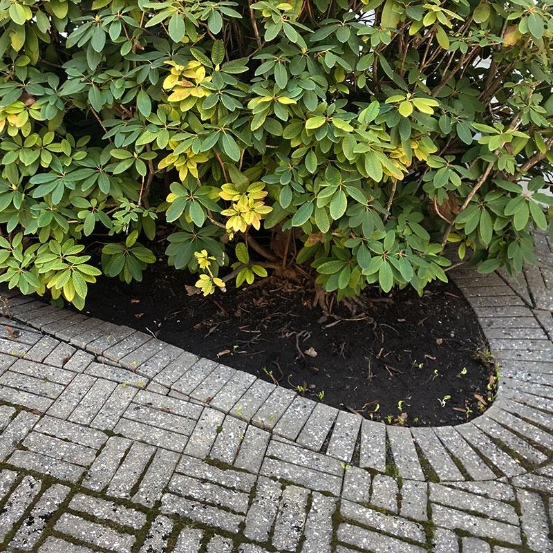 blomsterbed2.jpg