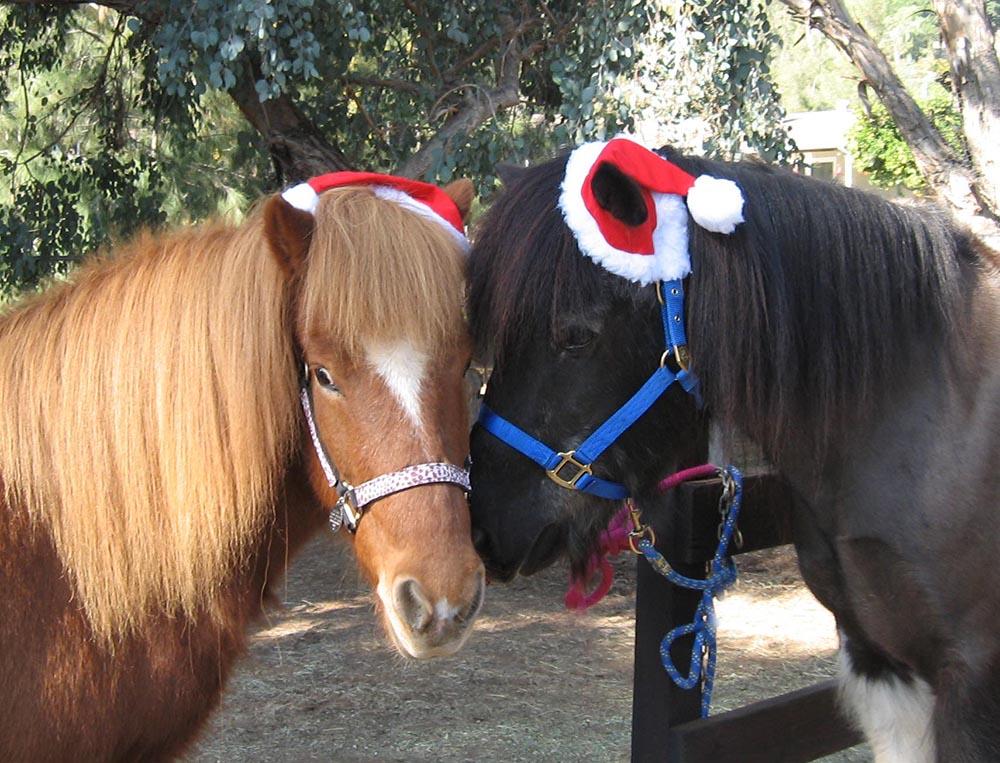 Star and Ari pose for a Christmas photo