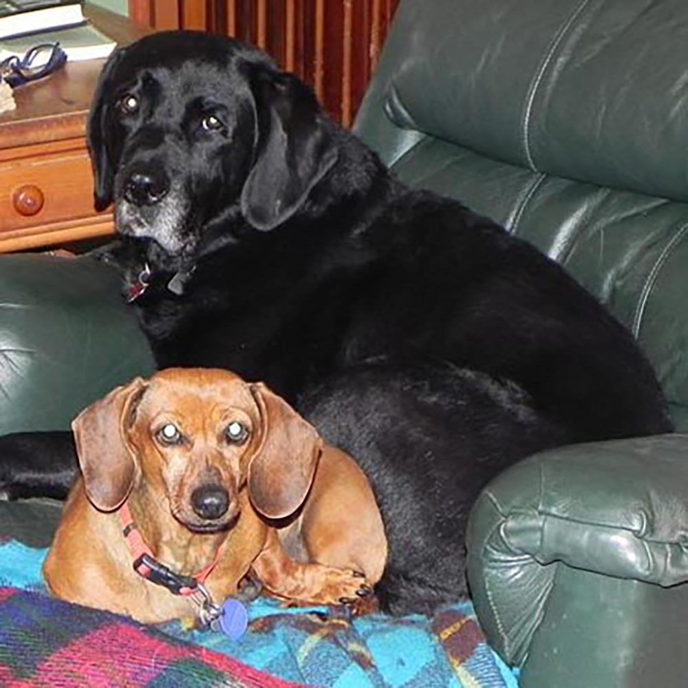 RIP my beloved Angus, shown here with Mollie