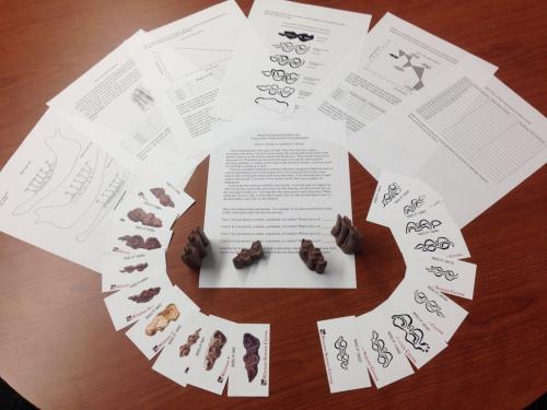 bison-kit-copy.jpg