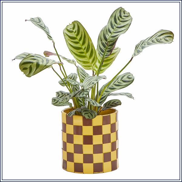 Matilda_Goad_woven_planter_1_600x.png