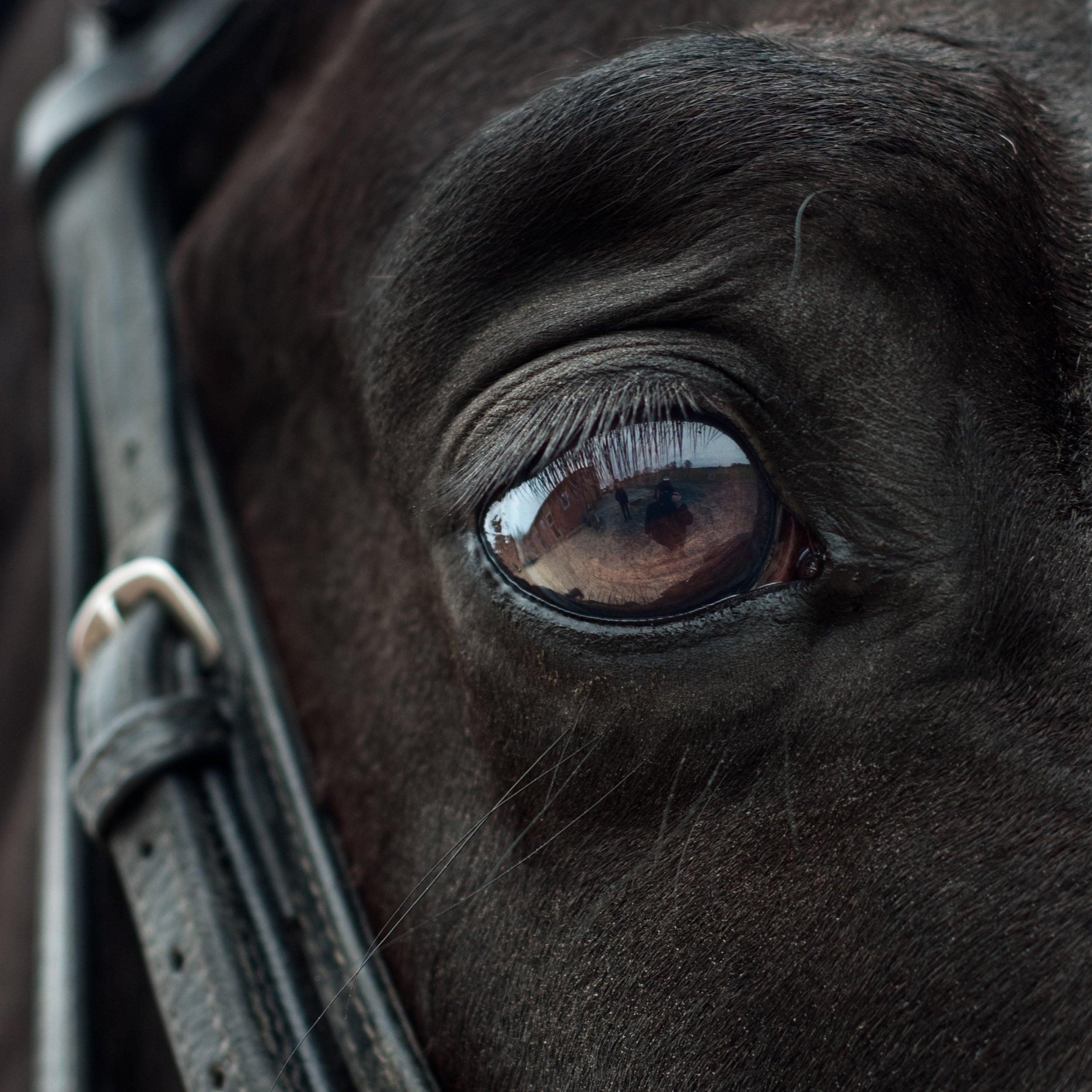 horse-2112196.jpg