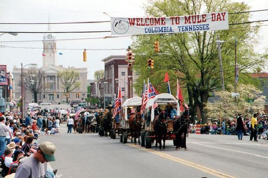 mule-day-parade-in-downtown.jpg