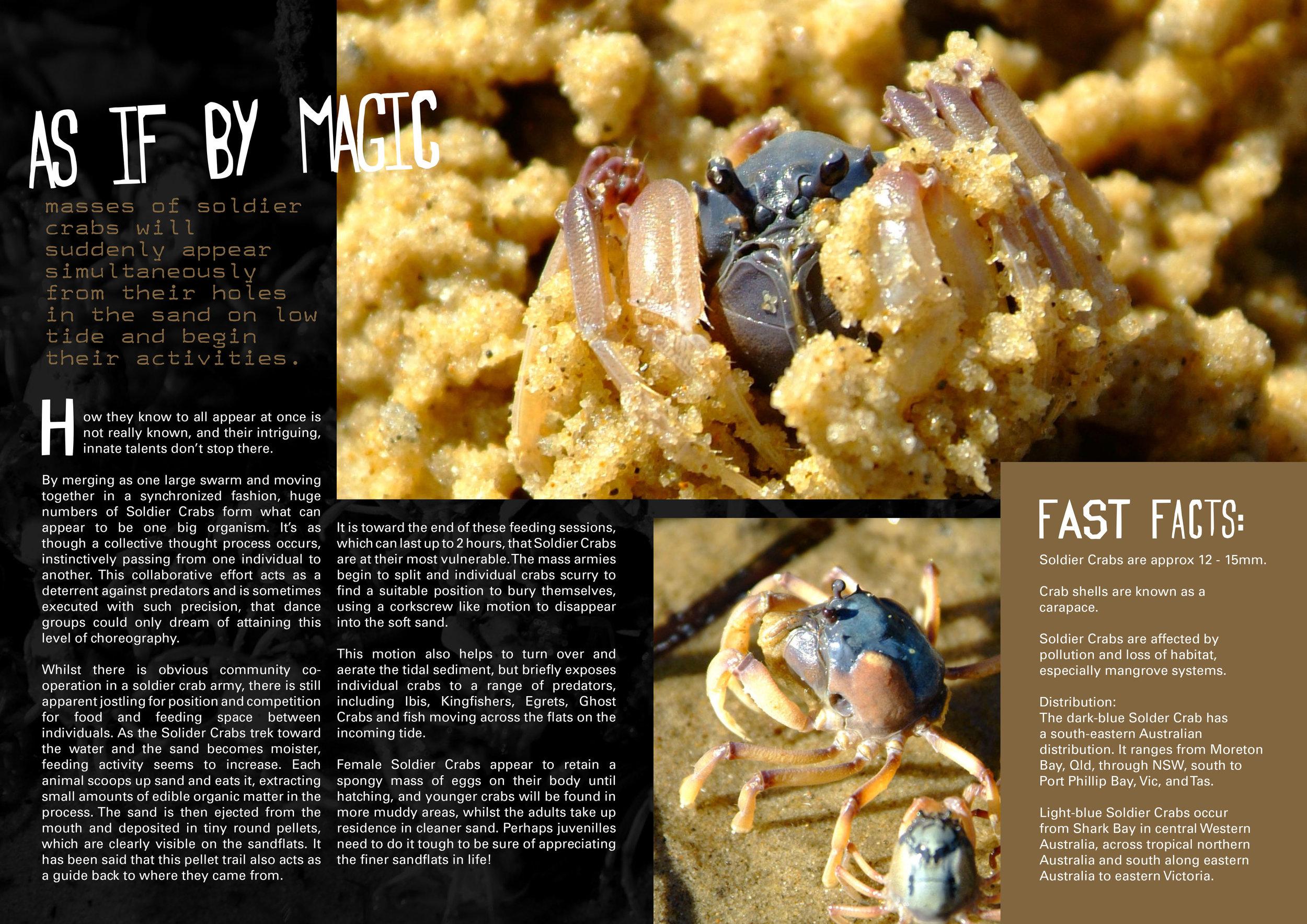 Soldier Crab Armies-2.jpg