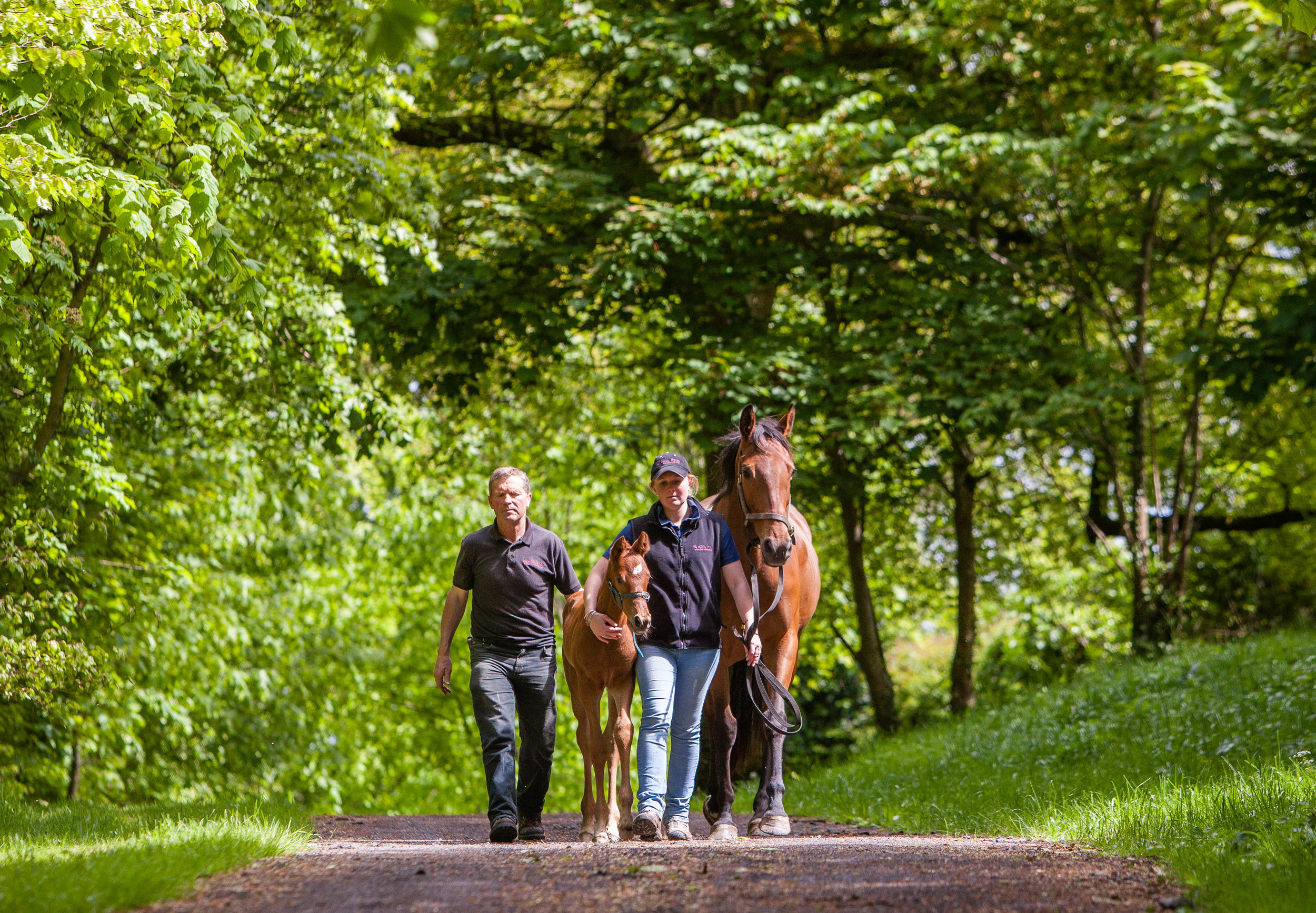 Boutique Stud taking care of top quality thoroughbred's