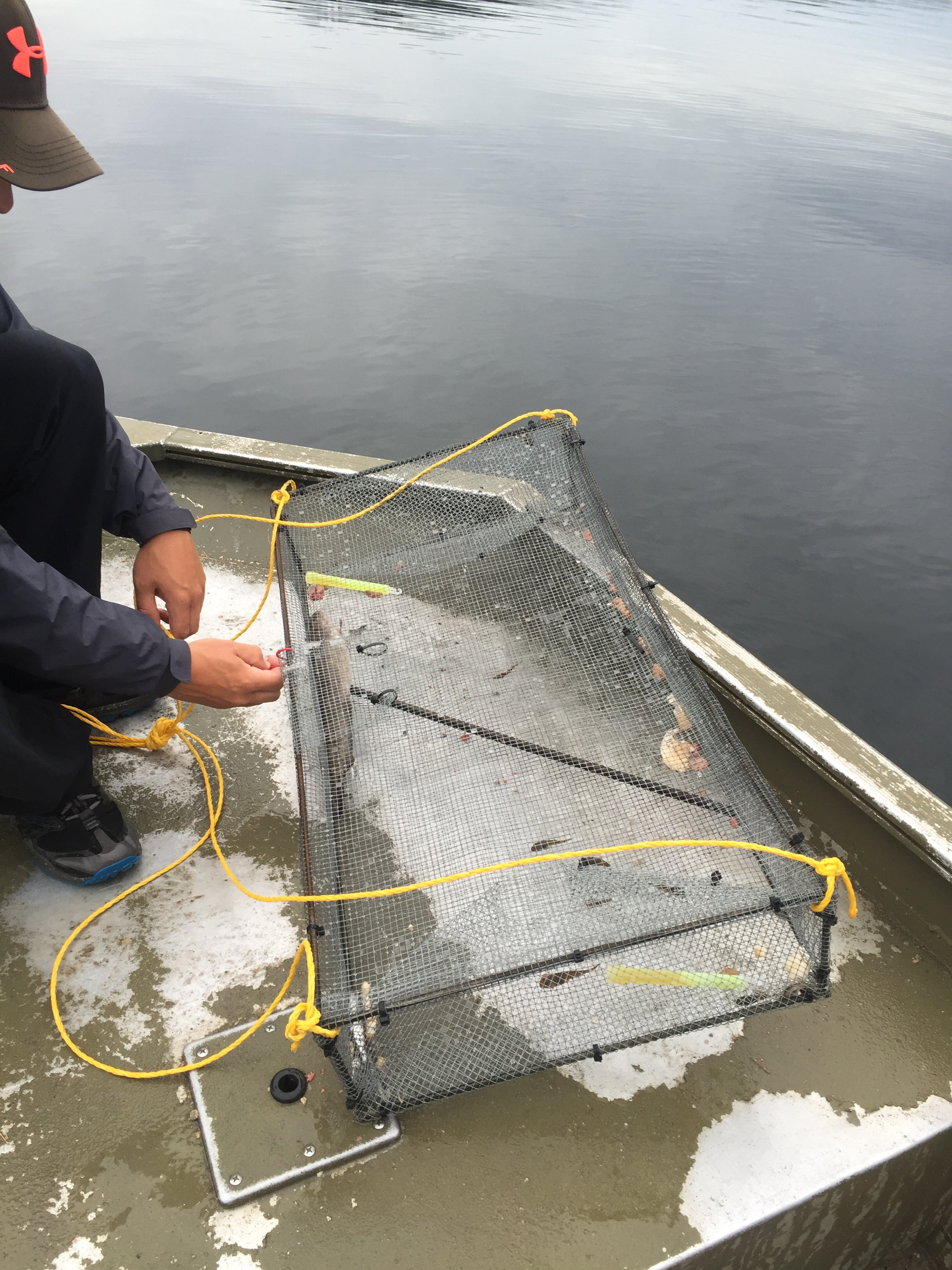 Custom made minnow traps for capturing Deepwater Sculpin