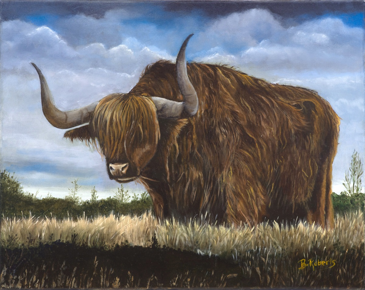"""HIGHLANDER COW"",  Oil on Canvas,  16x20 inches (unframed),  ON EXHIBIT"