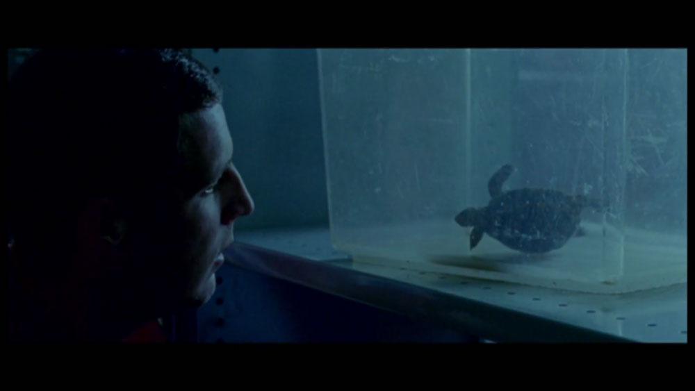 Tortoise-still-2.jpg