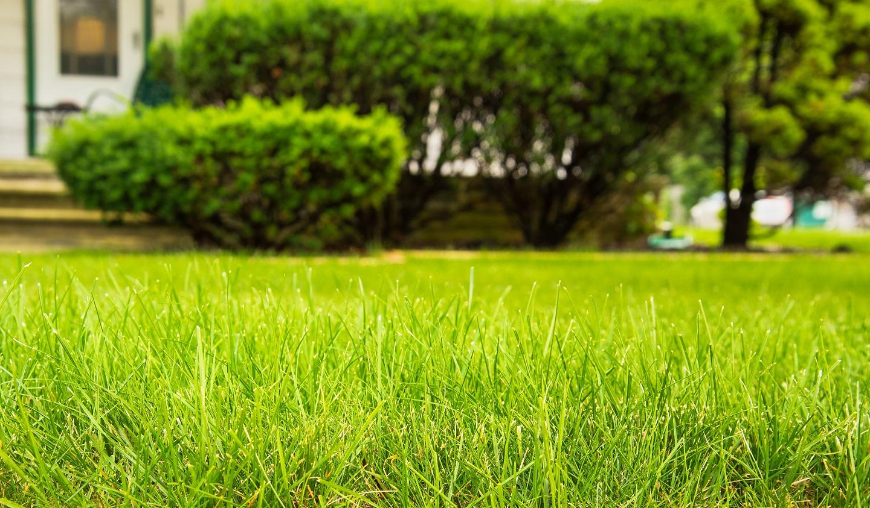 Newington CT lawn care and landscape maintenance