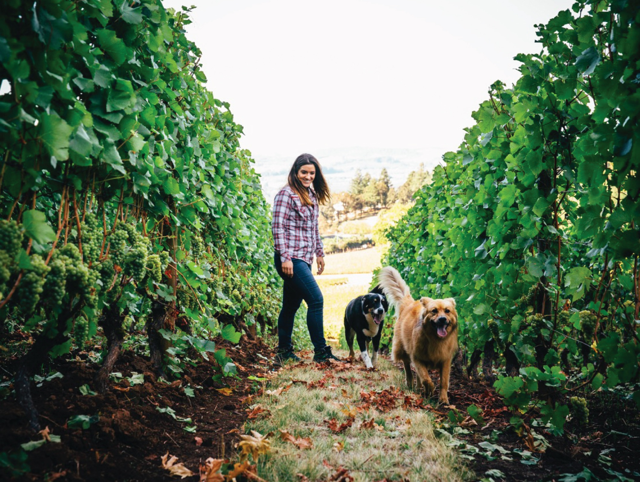WINERIES AND VINEYARDS - View the wineries and vineyards that make the Chehalem Mountains and Ribbon Ridge AVAs special.