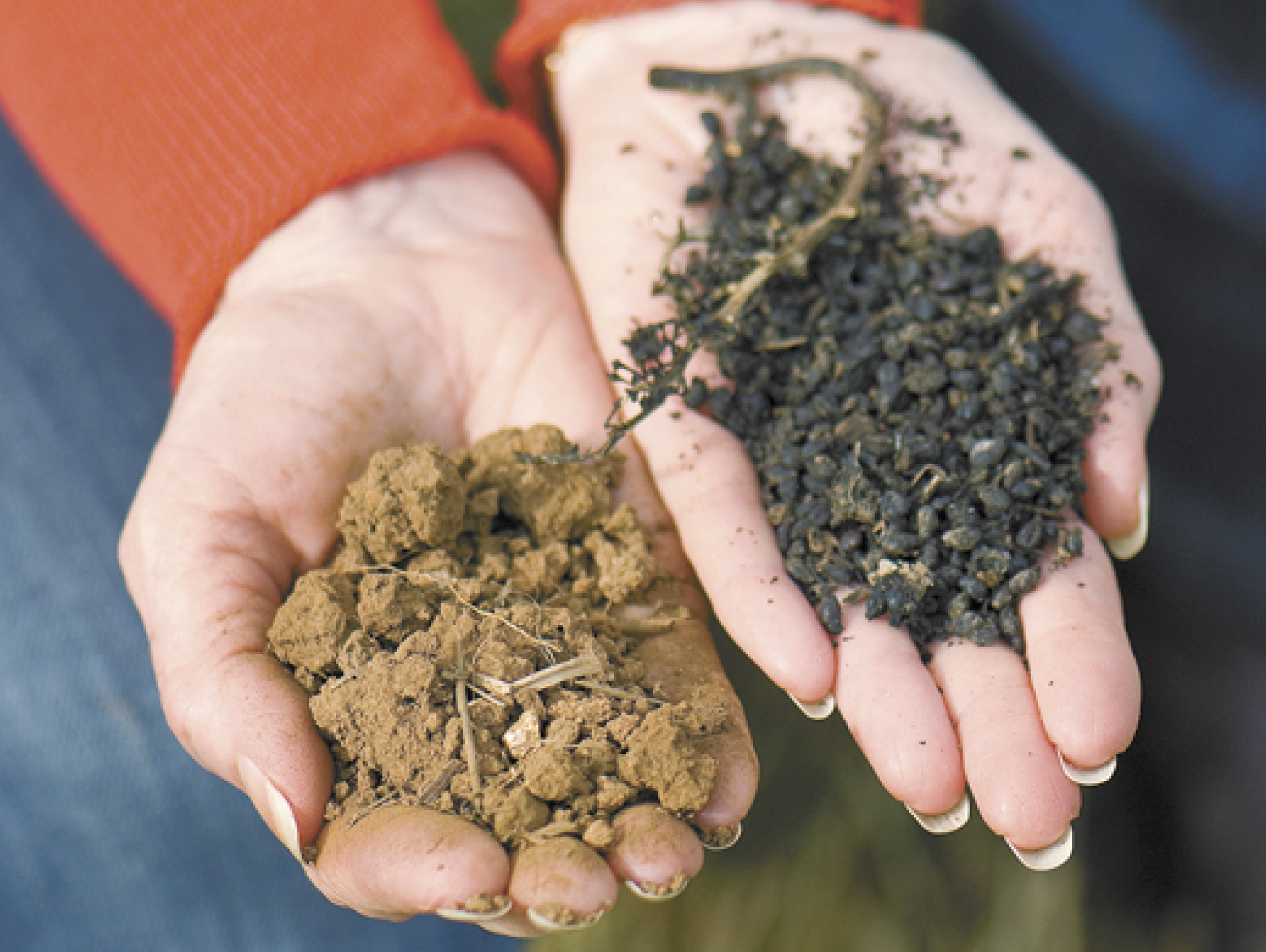 Diverse Soils - The Chehalem Mountains were formed by uplifted sedimentary seabeds, lava flows, and wind-blown silt, resulting in some of the most diverse soils and wines in Willamette Valley wine country.