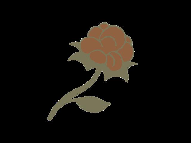 Coton natif logo.png