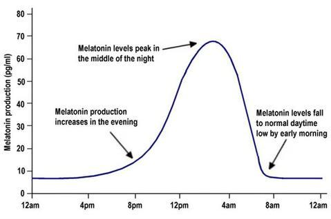 melatonin_graph.jpeg