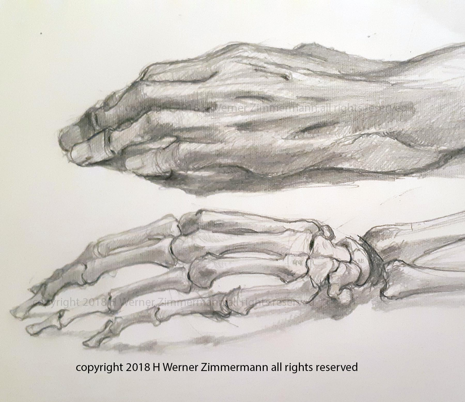 anatomy-hand-studies-Sept-28-2018.jpg