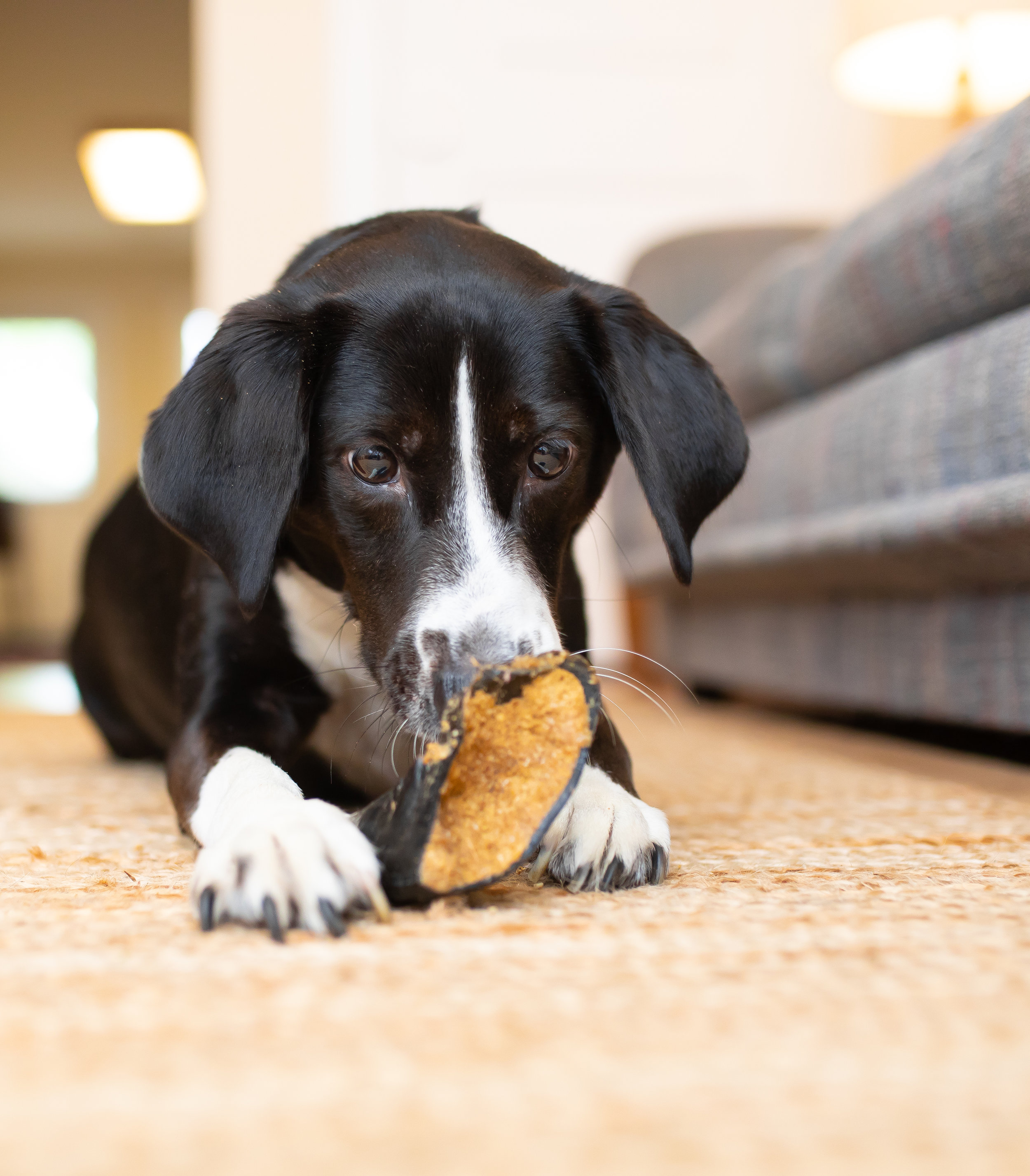 refill with your dog's favorite fillings to keep the fun going! -