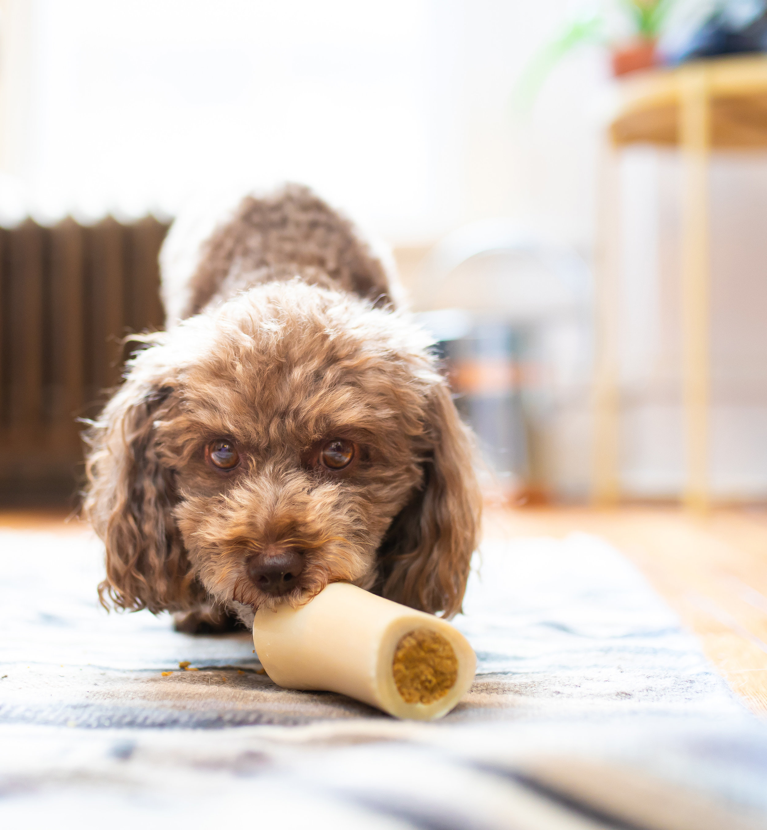 refillable with your pup's favorite snacks for an even longer lasting chew -