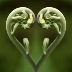 fern-heart.jpg
