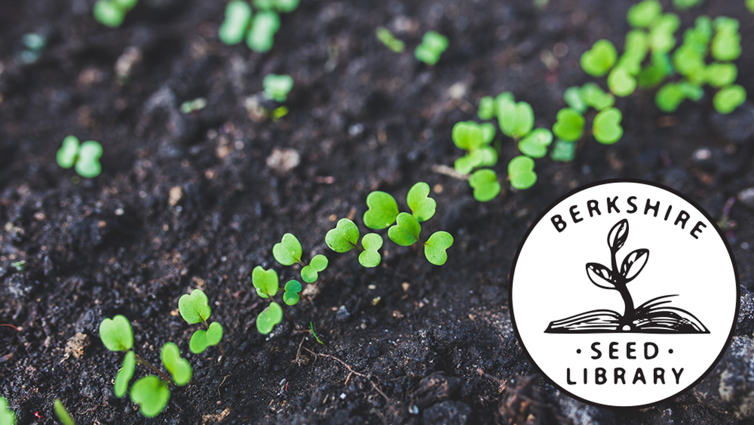 Seedlings spouting in soil with Berkshire Seed Library logo