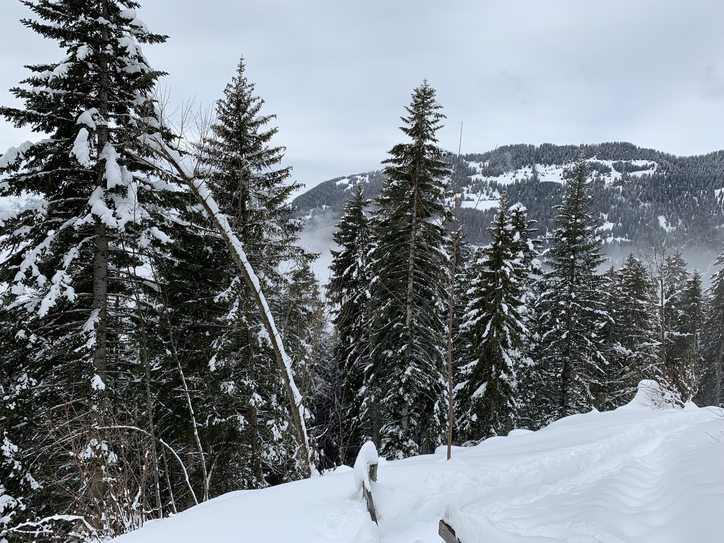 A view from a snowshoeing trail. Villars-sur-Ollon, Switzerland, February 2019.